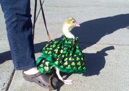Dinah St. Pat's Outfit 2012-03-12  Rapid City SD