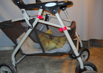 Goslings First Ride in Stroller 2012-02-14