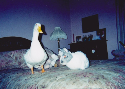 Bedfellows - Jen's Duck and Rabbit